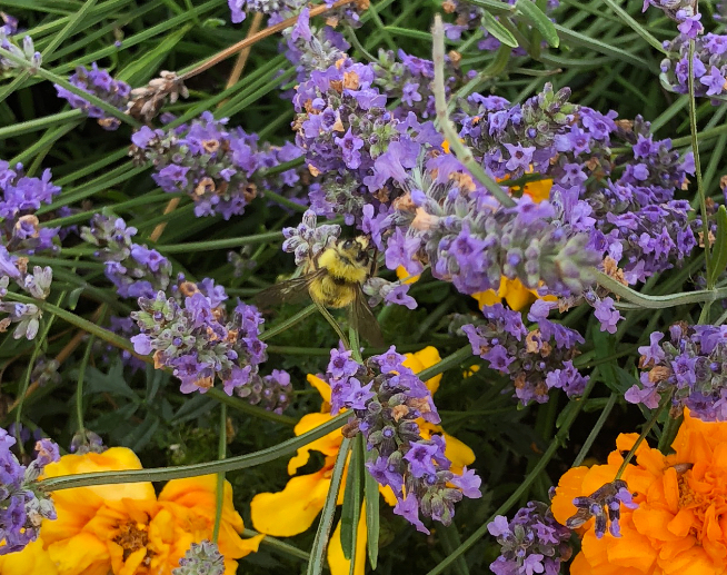Four Ways to Help Save the Pollinators